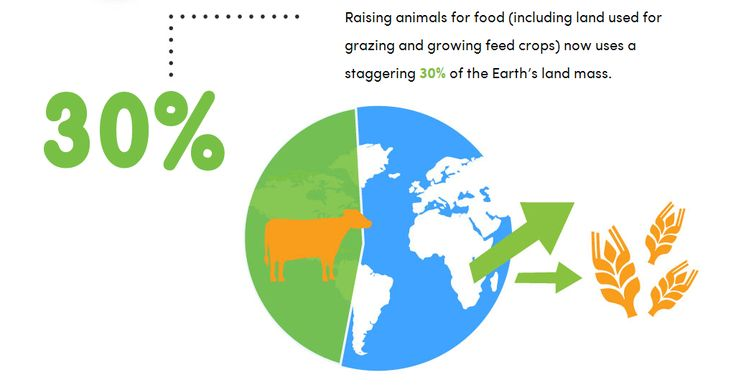 How Meat Contributes to Global Warming