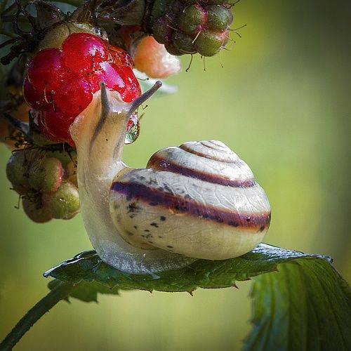 Snail by Anatolich on 35Photo✖️More Pins Like This One At FOSTERGINGER @ Pinterest✖️