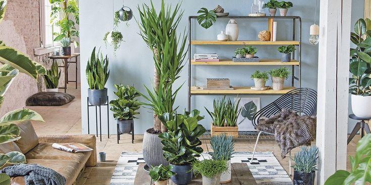 Top 10 grote kamerplanten