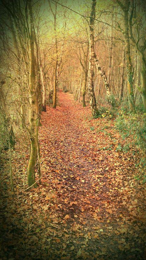 Autumn in Wimborne