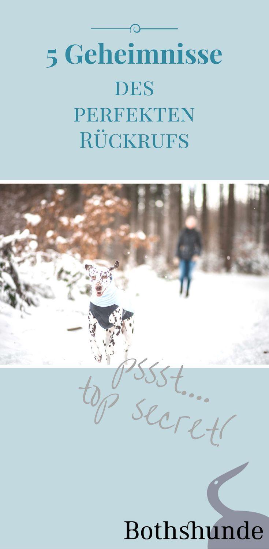 Die 5 Geheimnisse Des Perfekten Ruckrufs Hunde Tiere Hund Hundeerziehung