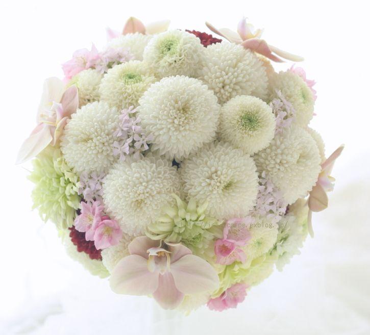 ものすごく迷いましたがこの一枚で。和装に持つラウンドブーケ。白いピンポンマムをたくさんと、ボルドーの挿し色、微妙な色あいの胡蝶蘭、淡いピンクの小花は桜小町...