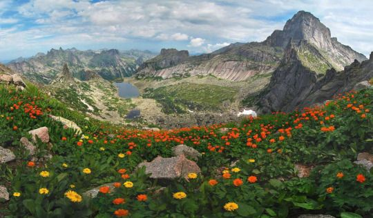 Breathtaking photo of a mountain range with flowers blooming. Somewhere in Russia. Photo by Alex Klekovkin. ..