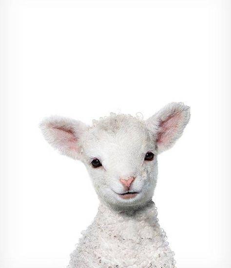 Lamm-Print, Baby Tier Kinderzimmer Kunst, The Crown Prints, Farm Animal Prints, Lamm Kinderzimmer Dekor, Baby Zimmer Wandkunst, Baby Schaf Tier drucken