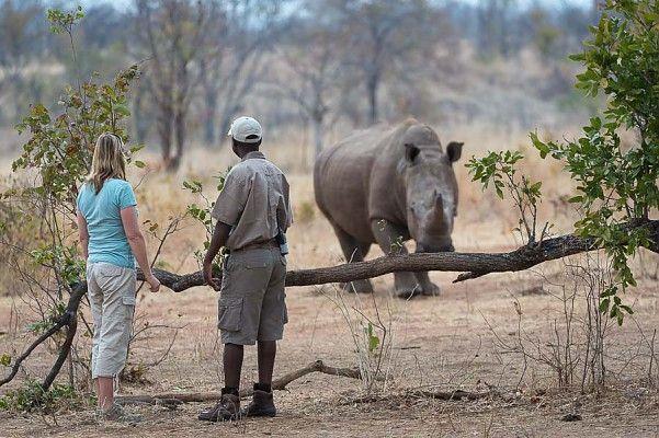 Happy Rhino Friday!