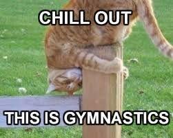 Image result for animals doing gymnastics