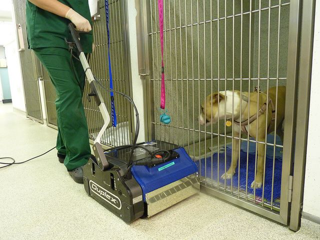 17 Best Images About Cleaning A Veterinary Practice On
