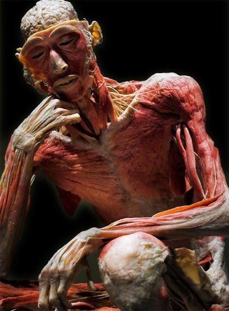 Body Worlds (the ORIGINAL human body exhibit) is a MUST SEE.  I was blessed to see it in Denver, Co.  tw  http://www.bodyworlds.com/en.html