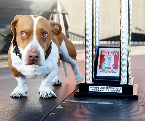 Dlisted | The World's Ugliest Dog 2013 Is Crowned And I Demand A Recount