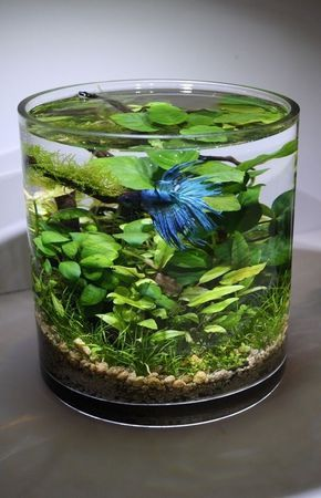 Aqua Bonsai is a creative living art of micro aqua landscape in a vase or container with an abundance of aquatic plants. By using the natural ecosystem to maintain its life, it shows the harmony of living things. No air pump needed as the plants give off oxygen. www.ContainerWaterGardens.net by jolene