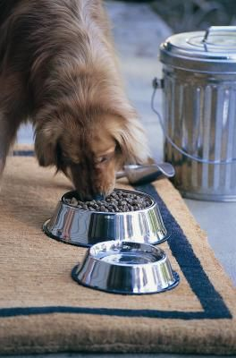 You're such a good dog parent, you've decided to go the extra mile and homemake your pup's food instead of feeding her store-bought kibble. Add bone meal to your recipe to make the most of your efforts and improve nutritional value. You're sure to get a slobbery kiss of gratitude.
