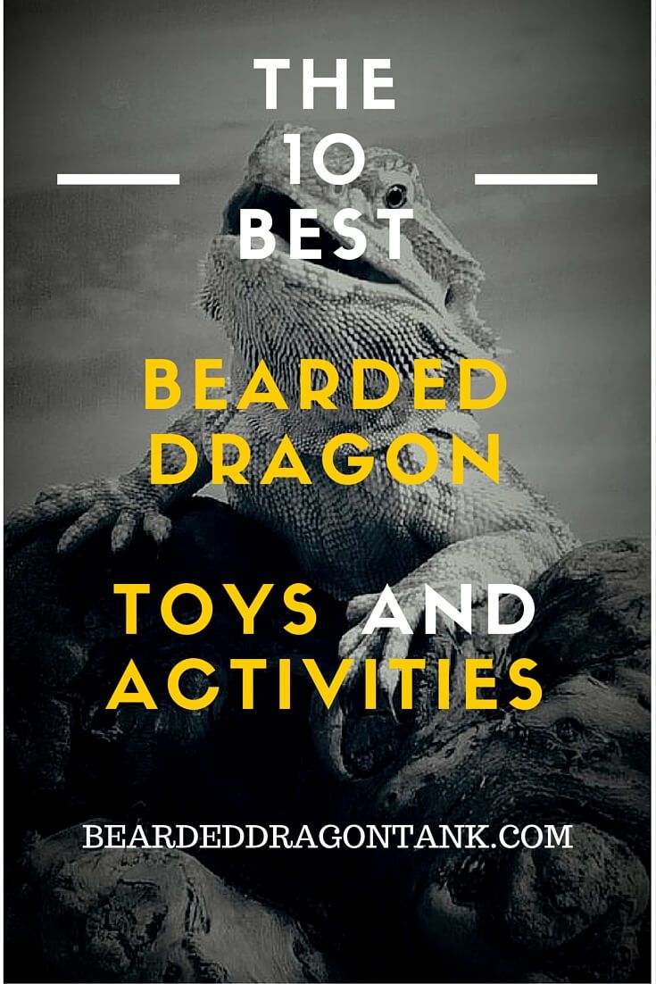 Bearded dragons can get depressed or bored easily. Prevent that with these 10 toys/activities! http://beardeddragontank.com/the-10-best-bearded-dragon-toys-and-activities