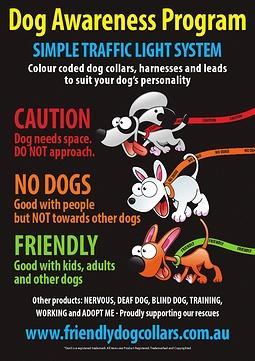 31 Best Misha Blind Dog Images On Pinterest Pets