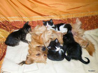 Állatfotók állatainkról, gyerekeknek, felnőtteknek!: Pötti a dada, sok fotóval!
