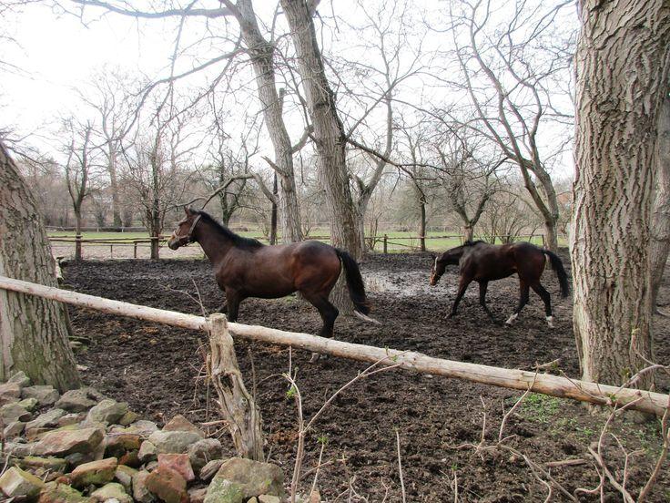 Předjaří a koně