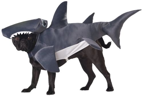 dog dressed as shark. Can't go wrong with that