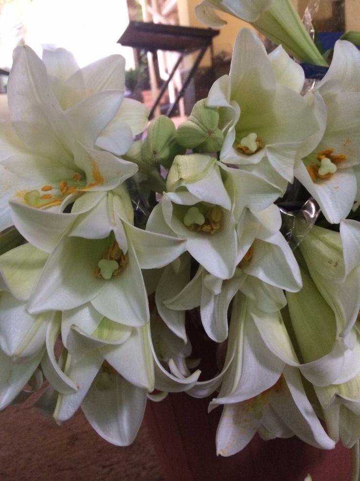 St Joseph lillies