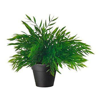 39 best Badkamer images on Pinterest   Plants, House plants and Plant