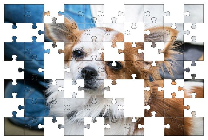 Free Jigsaw Puzzle Online - Chihuahua