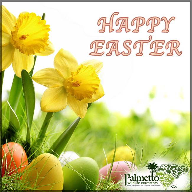 Wishing everyone a safe and Happy Easter! #HappyEaster #PalmettoWildlifeExtractors