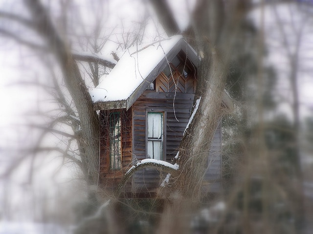 Tree House | Tree houses, House and Treehouses