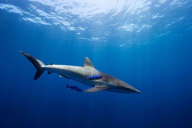Les plus belles créatures du monde marin photographiées par Jorge Hauser | Buzzly