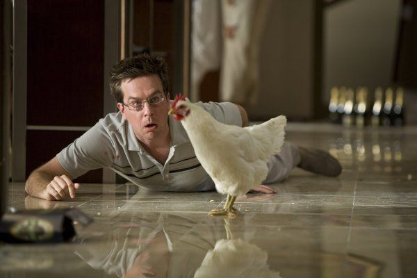 Pictures & Photos from The Hangover - IMDb