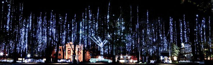 Harding University Christmas lights