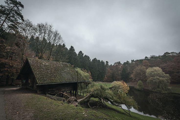 Einfach mal machen: Wildpark Schwarze Berge im November