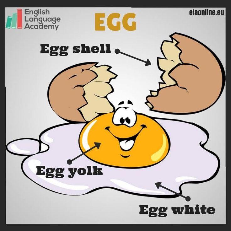 Vocabulary: Egg                                                                                                                                                                                 Mais