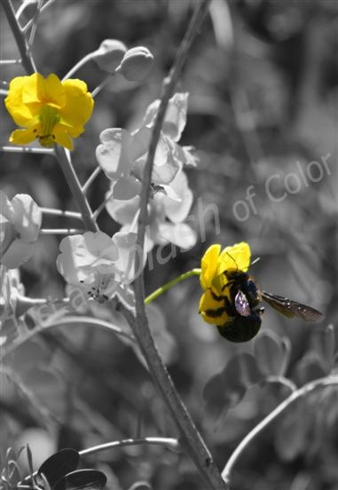 Just a splash of color t e photography unique black white photography with a