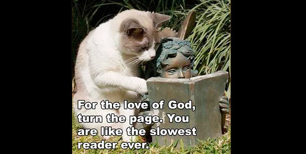 CatCat, Laugh, Pictures, Funny Stuff, Imgur, Humor, Child Reading, Children Reading, Slowest Reader