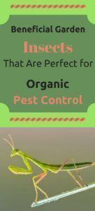 Beneficial Garden Insects That Are Perfect for Organic Pest Control Many of the steps employed in organic gardening employ the traditional means to care for a garden. Especially in regards to organic pest control methods. #controlpestsingarden #pestcontrolgardeninsects