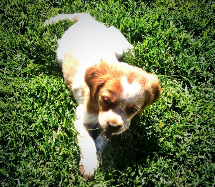 Meet Mia, our newest Best's family member and wine dog. #puppy #winedog