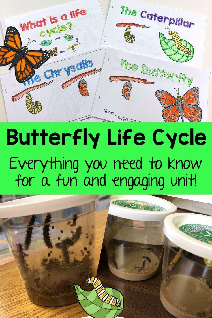 Teach The Butterfly Life Cycle Kindergarten Butterfly Life Cycle Activities Butterfly Life C Butterfly Life Cycle Life Cycles Butterfly Life Cycle Kindergarten [ 1102 x 735 Pixel ]