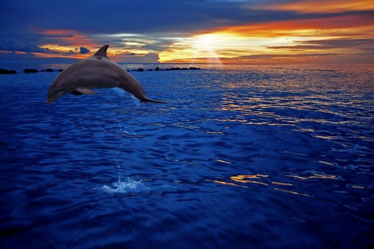 Una de las mayores atracciones de Curaçao son sus delfines. ¿Se perderá de este increible atardecer en la playa? Reserve hoy mismo un hotel en Curaçao y relájese en alguna de sus maravillosas playa.