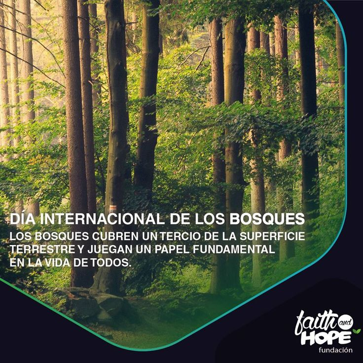 En este día de celebración mundial de los bosques tenemos la oportunidad de concienciarnos sobre la importancia de todos los tipos de ecosistemas boscosos y árboles, y de celebrar las diferentes maneras en las que los bosques nos mantienen y protegen.  #CuidaElPlaneta  Para mas información te dejamos este link: http://www.un.org/es/events/forestsday/