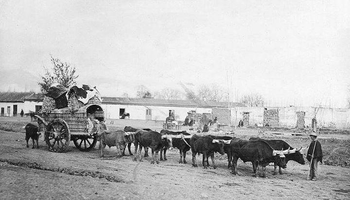 Carreta en viaje desde Santiago a Valparaiso en 1865