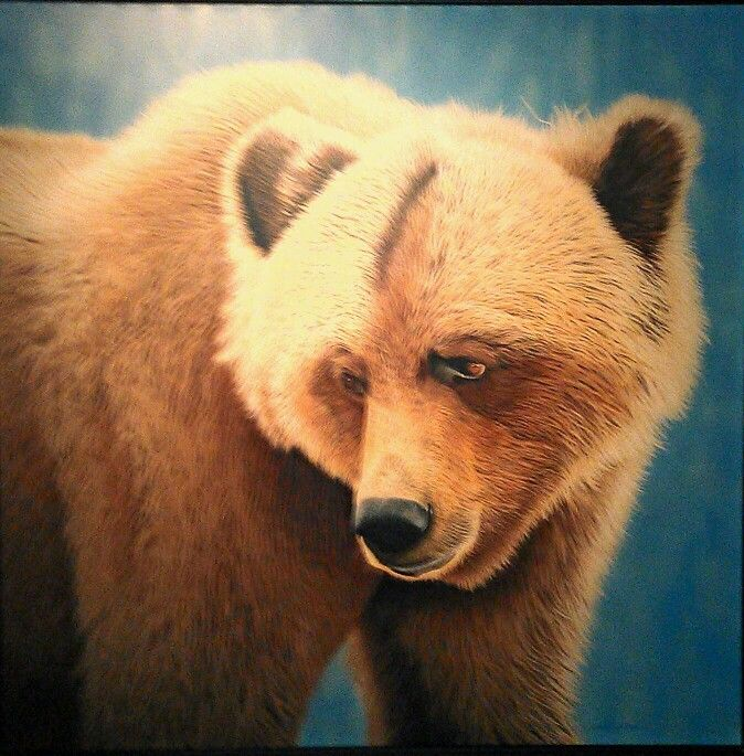 Grizzly Bear by Lynn Pocklington, hung in Wood Restaurant across from Pemberton Gayeway Village Suies Hotel