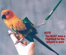 Wesco Bird Kabob Bird Toy for Parrots - Mucho Grande