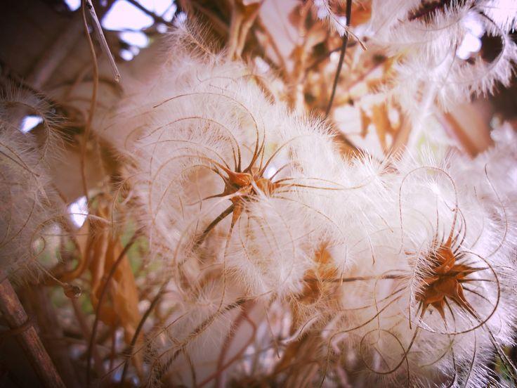 Flowers //NZ