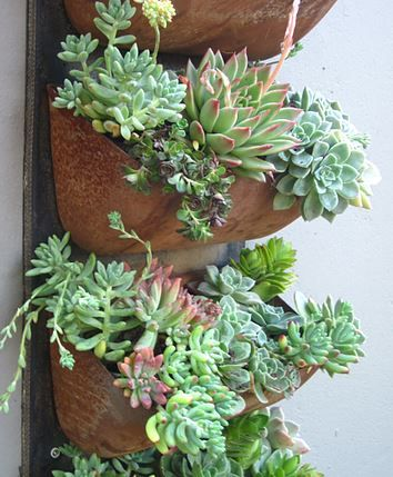 succulents planted in recycled bucket elevator belt from an old bread factory, attached to the wall for vertical planting