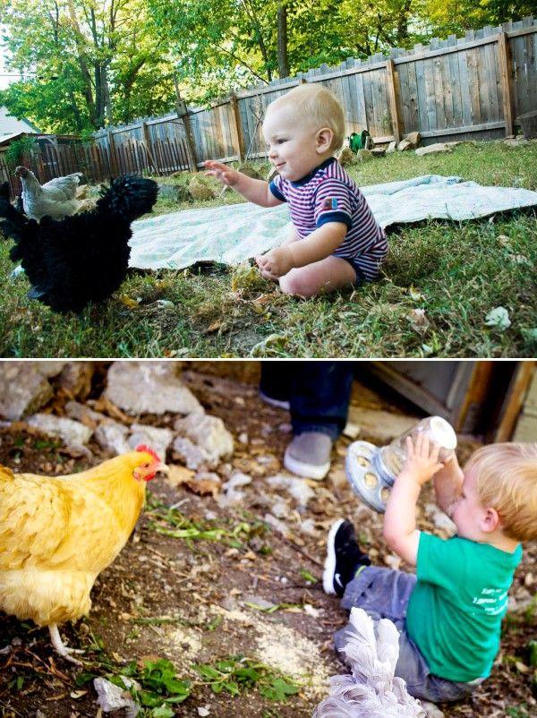 Raising Urban Backyard Chickens : urban chickens