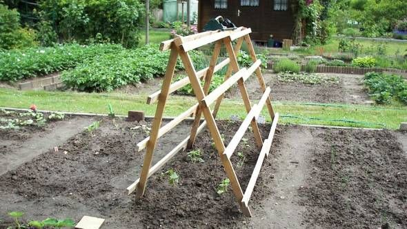 Salatgurken Anbauen Im Freiland Und Gewachshaus Tomaten Garten Gurken Anbauen Gemusegarten Anlegen