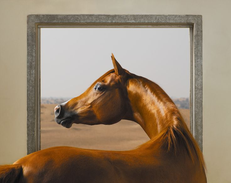 Windows Chestnut (JJ Ballarina, Arabian) from Equus, 2008, Tim Flach "