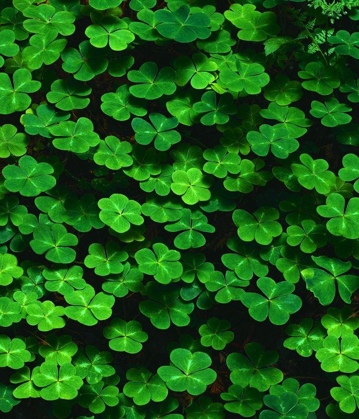 green clover wallpaper - photo #9