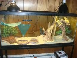 how to set up a carpet snake tank