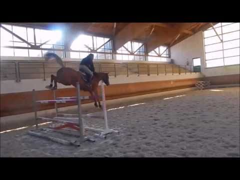 Euro Horse Jumping: Lancaster E.H. - 6 y.o. Gelding by Lordanos x Cassin...