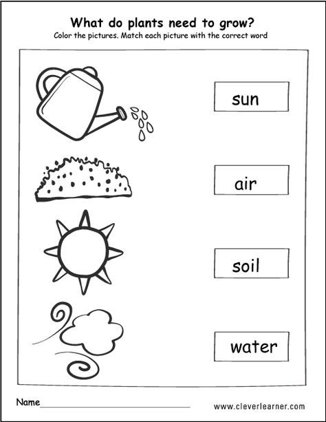 What do plants need to grow activity worksheet for