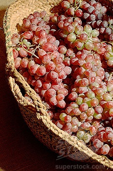 grape harvest #Wine #France  Baskets filled with grapes...lightly dipped with frosty sugar crystals....very french.